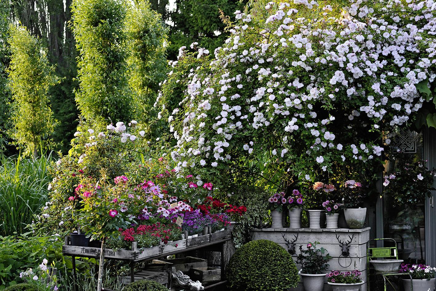 Garten : Janke D