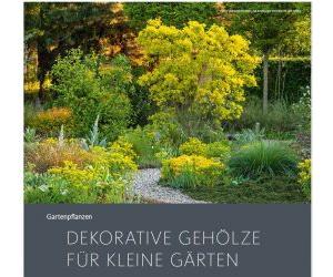 Dekorative Gehölze Für kleine Gärten