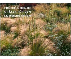 Frühblühende Gräser für den Sommergarten