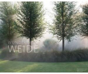 Wunderbaum Weide