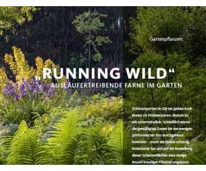 Running Wild. Ausläufertreibende Farne im Garten.